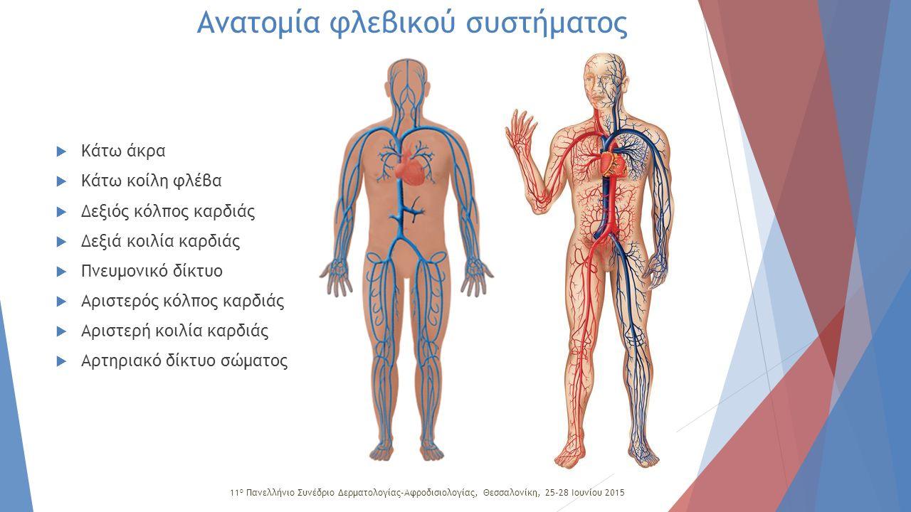 Φλεβικό σύστημα κάτω άκρων  Επιπολής (υποδόριο)  Εν τω βάθει  Διατιτραίνουσες φλέβες  Κύριο χαρακτηριστικό όλου του φλεβικού συστήματος είναι η ύπαρξη βαλβίδων, που κατευθύνουν το αίμα από την περιφέρεια προς το κέντρο, αλλά και από το επιπολής σύστημα στο εν το βάθει.