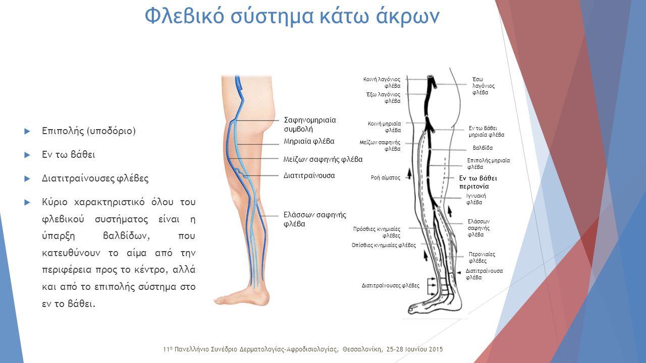 Φλεβικό σύστημα κάτω άκρου Επιπολής Μείζων σαφηνής Ελάσσων σαφηνής Εν τω βάθει Μηριαία Εν τω βάθει μηριαία ΙγνυακήΠερονιαία Πρόσθια και οπίσθια κνημιαία Διατιτραίνουσες Φλεβικό σύστημα κάτω άκρων 11 ο Πανελλήνιο Συνέδριο Δερματολογίας-Αφροδισιολογίας, Θεσσαλονίκη, 25-28 Ιουνίου 2015