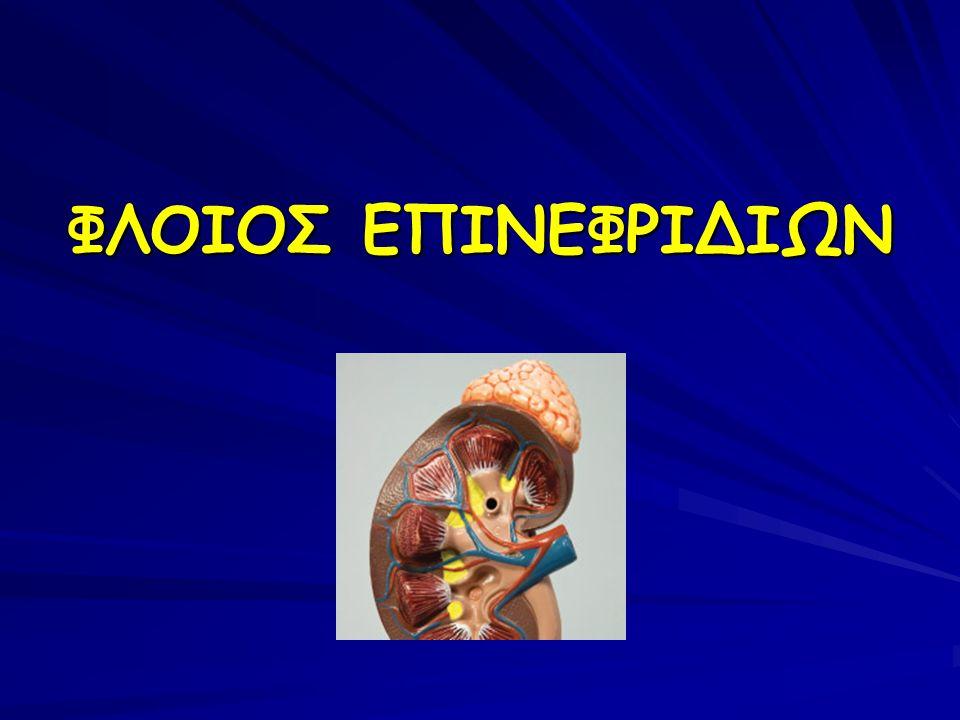 ΦΛΟΙΟΣ ΕΠΙΝΕΦΡΙΔΙΩΝ