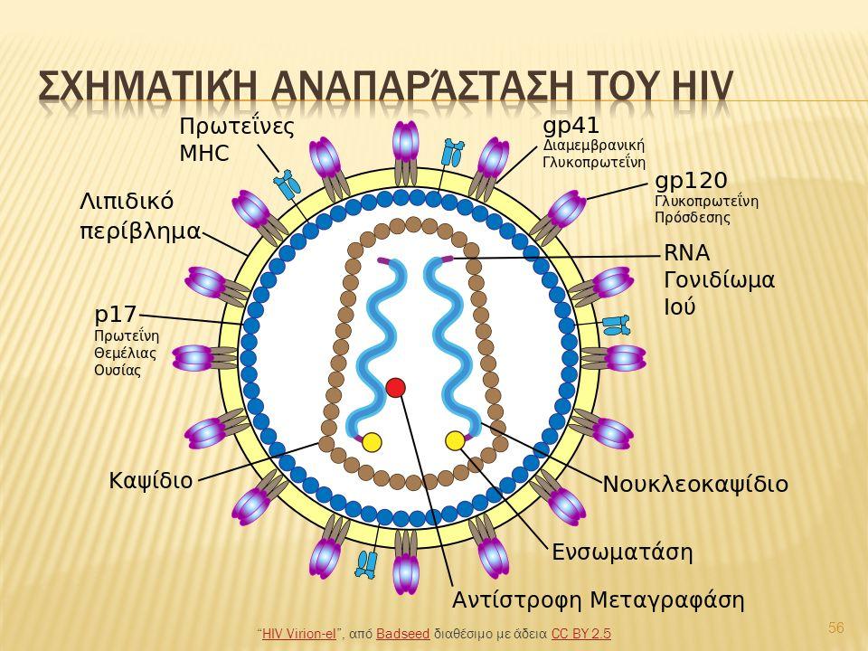 56 HIV Virion-el , από Badseed διαθέσιμο με άδεια CC BY 2.5HIV Virion-elBadseedCC BY 2.5