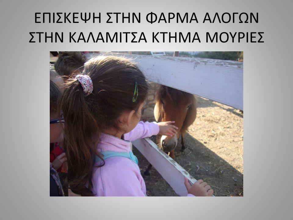 Τα σκυριανά αλογάκια είναι ζώα συντροφικά, κοινωνικά, δυνατά, έξυπνα και αγαπάνε πολύ τα παιδιά