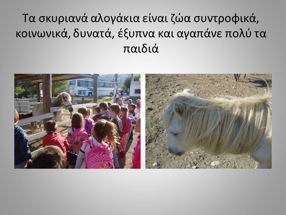 Τα άλογα δεν πρέπει να τα κουράζουμε στη δουλειά.