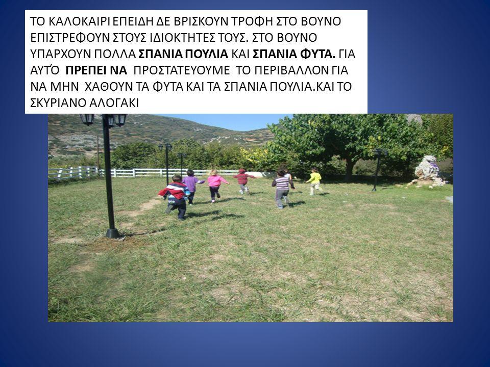 ΤΟ ΣΚΥΡΙΑΝΟ ΑΛΟΓΑΚΙ ΥΠΑΡΧΕΙ ΑΠΟ ΤΑ ΠΟΛΎ ΠΑΛΙΑ ΧΡΟΝΙΑ Σήμερα σκυριανά αλογάκια υπάρχουν 260σε όλη την Ελλάδα, και τα 187 ζουν στη Σκύρο.
