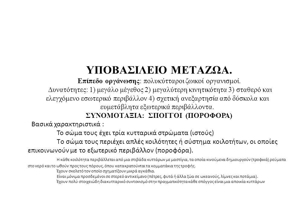 Δακτυλιδ/ληκες-Annelida