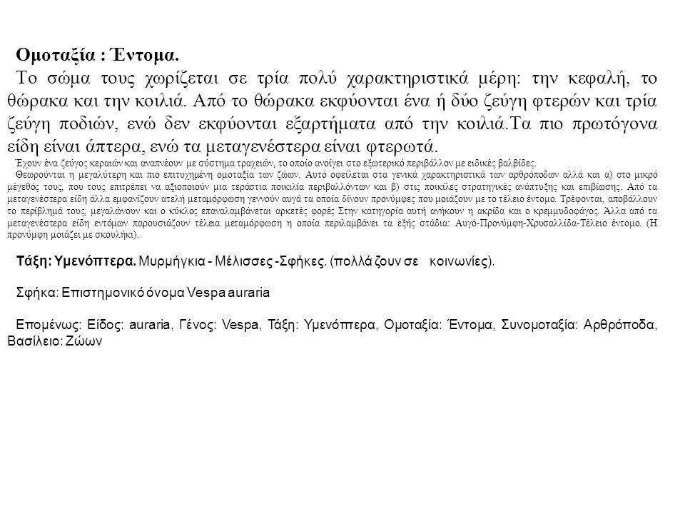 Εικόνα 5-7: Αρθρόποδα, η μεγάλη πλειοψηφία των ζωικών ειδών