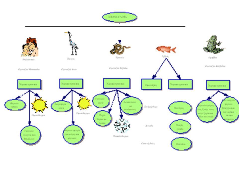 ΣΥΝΟΜΟTΑΞΙΑ: ΧΟΡΔΩTΑ Περιλαμβάνει υδρόβιους και χερσαίους οργανισμούς. Χαρακτηριστικά που μοιράζονται με τ' ασπόνδυλα: Αμφίπλευρη συμμετρία, κεφάλι, σ