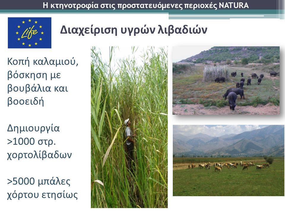 Κοπή καλαμιού, βόσκηση με βουβάλια και βοοειδή Δημιουργία >1000 στρ. χορτολίβαδων >5000 μπάλες χόρτου ετησίως Η κτηνοτροφία στις προστατευόμενες περιο