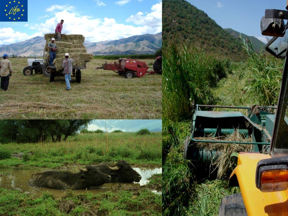 ΥΓΡΑ ΛΙΒΑΔΙΑ-ΑΝΟΙΞΗ ΥΓΡΑ ΛΙΒΑΔΙΑ-ΦΘΙΝΟΠΩΡΟ Η κτηνοτροφία στις προστατευόμενες περιοχές NATURA