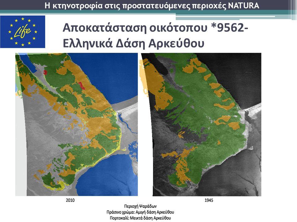 Αποκατάσταση οικότοπου *9562- Ελληνικά Δάση Αρκεύθου Η κτηνοτροφία στις προστατευόμενες περιοχές NATURA