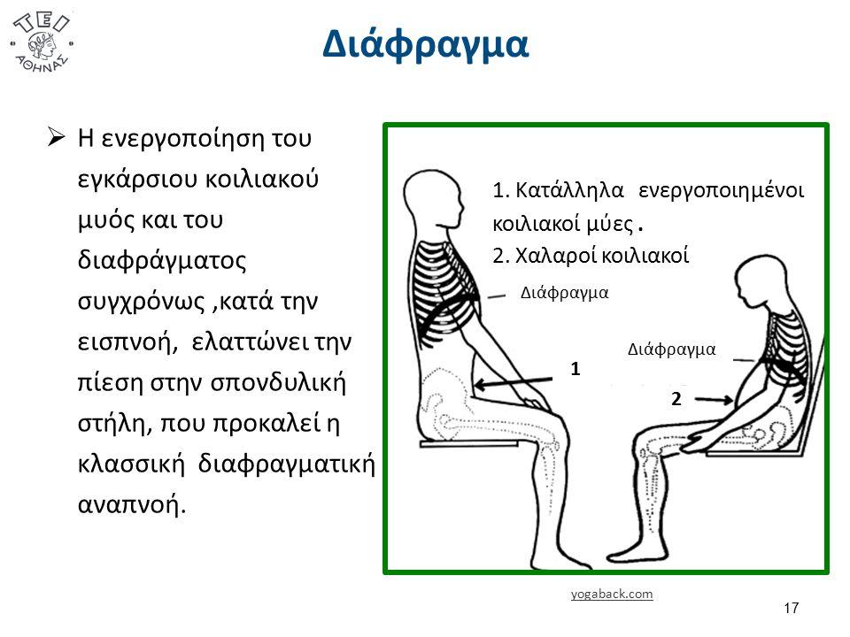 Διάφραγμα yogaback.com 17  Η ενεργοποίηση του εγκάρσιου κοιλιακού μυός και του διαφράγματος συγχρόνως,κατά την εισπνοή, ελαττώνει την πίεση στην σπονδυλική στήλη, που προκαλεί η κλασσική διαφραγματική αναπνοή.