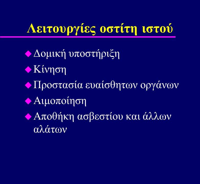 Σκελετός u Οργανική θεμέλια ουσία 35% u Ανόργανα στοιχεία 65% –99% του Ca 2+ του οργανισμού –85% P 3- –65% Na +, Mg + u Οστεοπρογονικά κύτταρα u Οστεοβλάστες u Οστεοκύτταρα u Οστεοκλάστες