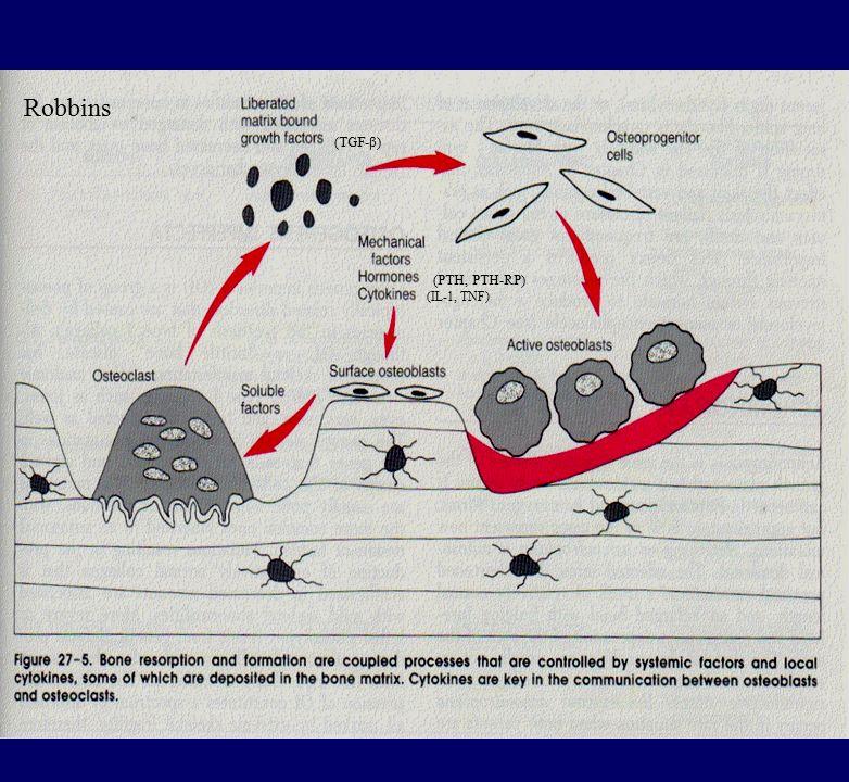 (PTH, PTH-RP) (IL-1, TNF) (TGF-β) Robbins
