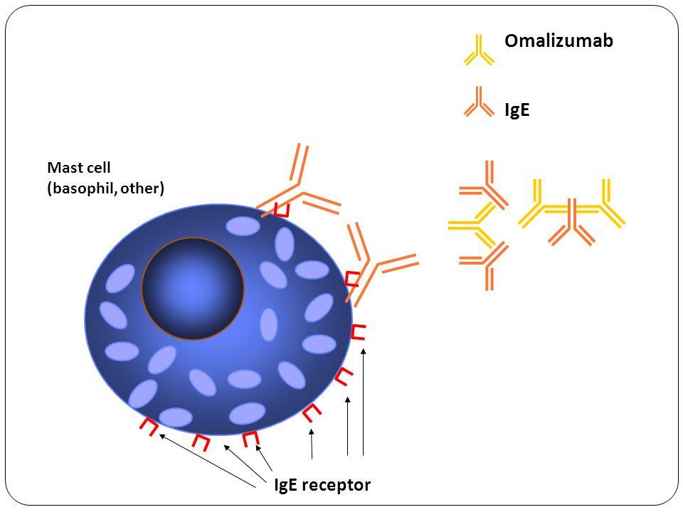 IgE receptor Mast cell (basophil, other) Omalizumab IgE
