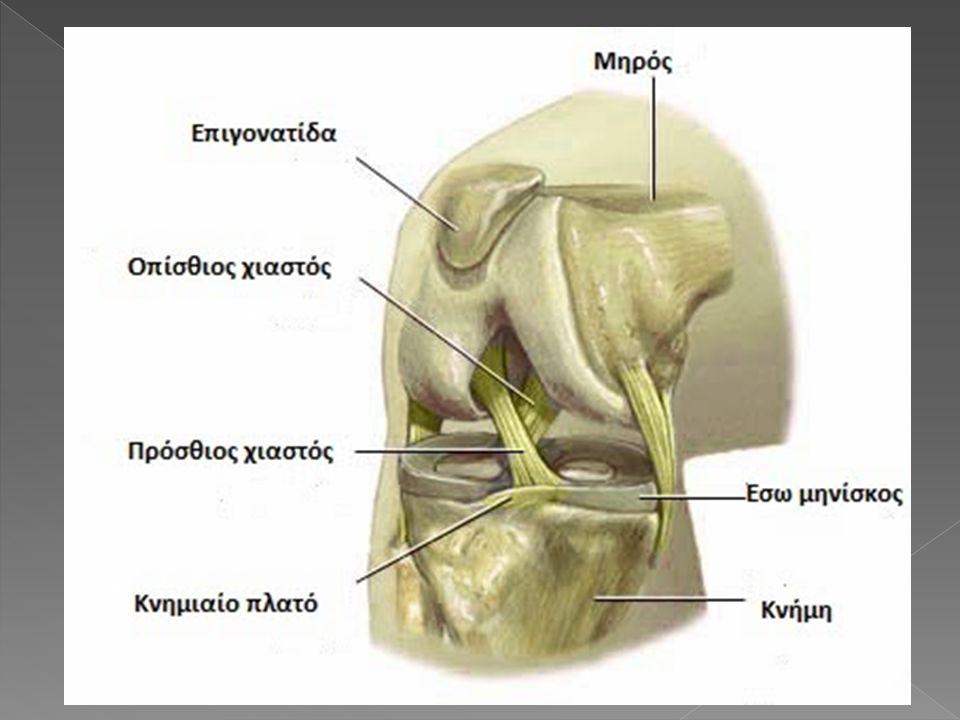 Εσω πλάγιος Ο έσω πλάγιος σύνδεσμος εκφύεται από το έσω υπερκονδύλιο κύρτωμα,κάτω από το φύμα του μεγάλου προσαγωγού,φέρεται προς τα κάτω και καταφύεται στην έσω επιφάνεια της κνήμης, 7cm ως 8 cm περιφερειακά του έσω μεσάρθριου διαστήματος,συναπτόμενος στενά με τον αρθρικό θύλακο και τον έσω μηνίσκο.