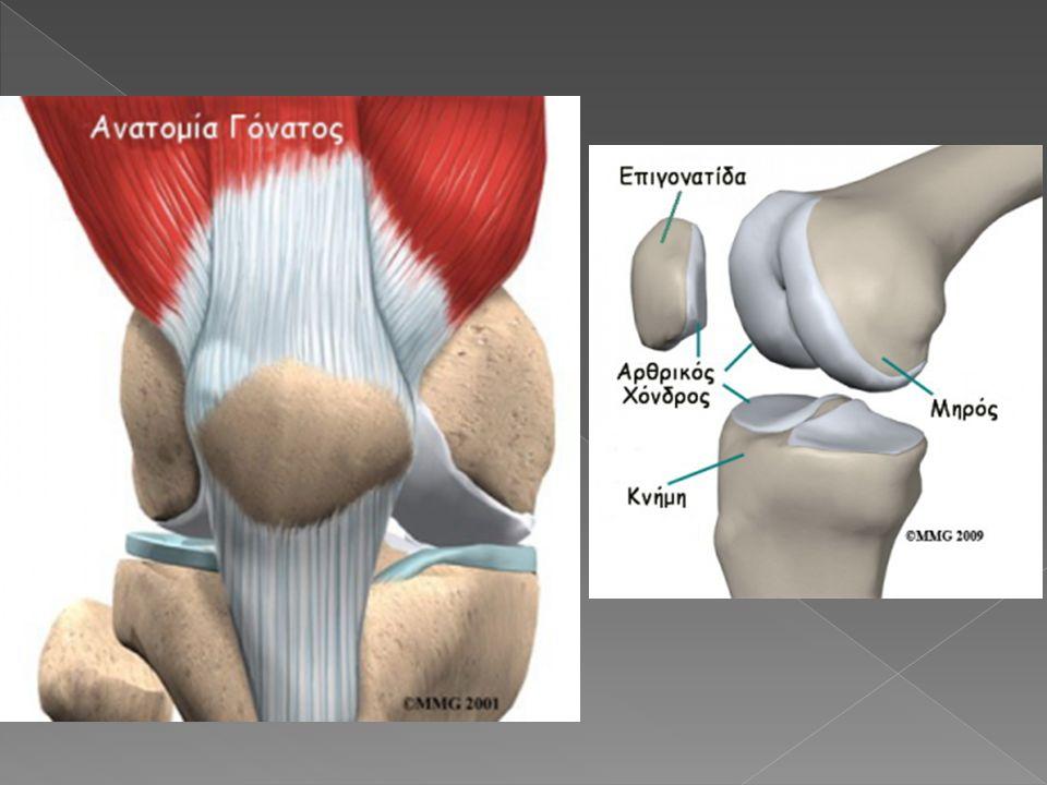 Η άρθρωση του γόνατος περιβάλλεται από μεγάλο αριθμό ορογόνων θυλάκων, ορισμένοι από τους οποίους, όπως ο υπερεπιγονατιδικός και του ημιυμενώδους, επικοινωνούν με το εσωτερικό του γόνατος.