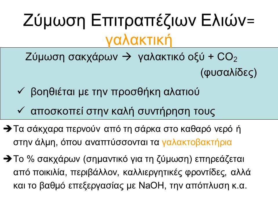 Ζύμωση Επιτραπέζιων Ελιών = γαλακτική Ζύμωση σακχάρων  γαλακτικό οξύ + CO 2 (φυσαλίδες) βοηθιέται με την προσθήκη αλατιού αποσκοπεί στην καλή συντήρηση τους  Τα σάκχαρα περνούν από τη σάρκα στο καθαρό νερό ή στην άλμη, όπου αναπτύσσονται τα γαλακτοβακτήρια  Το % σακχάρων (σημαντικό για τη ζύμωση) επηρεάζεται από ποικιλία, περιβάλλον, καλλιεργητικές φροντίδες, αλλά και το βαθμό επεξεργασίας με NaOH, την απόπλυση κ.α.