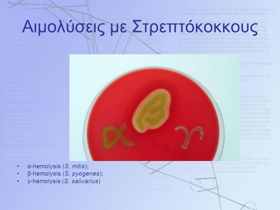 Αιμολύσεις με Στρεπτόκοκκους α-hemolysis (S. mitis); β-hemolysis (S.