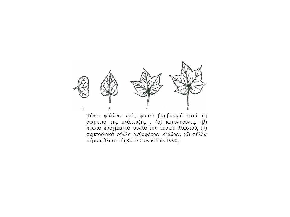 Τύποι φύλλων ενός φυτού βαμβακιού κατά τη διάρκεια της ανάπτυξης : (α) κοτυληδόνες, (β) πρώτα πραγματικά φύλλα του κύριου βλαστού, (γ) συμποδιακά φύλλα ανθοφόρων κλάδων, (δ) φύλλα κύριου βλαστού (Κατά Oosterhuis 1990).