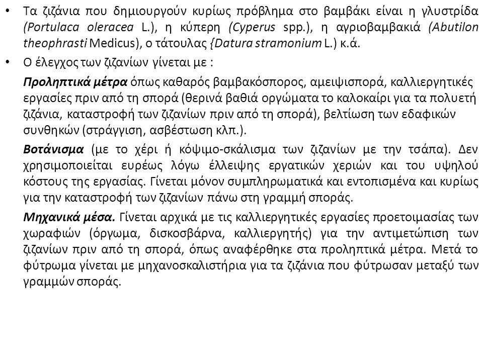 Τα ζιζάνια που δημιουργούν κυρίως πρόβλημα στο βαμβάκι είναι η γλυστρίδα (Portulaca oleracea L.), η κύπερη (Cyperus spp.), η αγριοβαμβακιά (Abutilon theophrasti Medicus), ο τάτουλας {Datura stramonium L.) κ.ά.