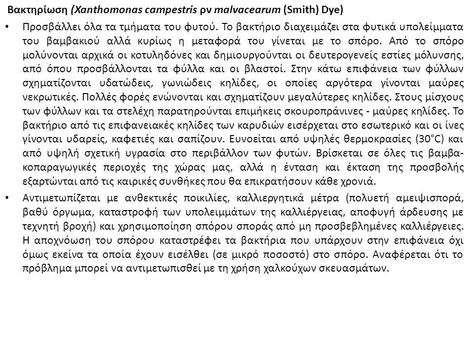 Βακτηρίωση (Xanthomonas campestris ρν malvacearum (Smith) Dye) Προσβάλλει όλα τα τμήματα του φυτού.