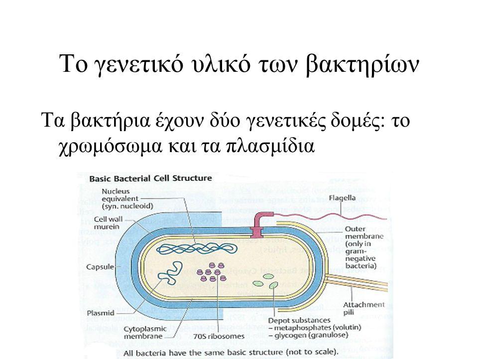 Το γενετικό υλικό των βακτηρίων Τα βακτήρια έχουν δύο γενετικές δομές: το χρωμόσωμα και τα πλασμίδια