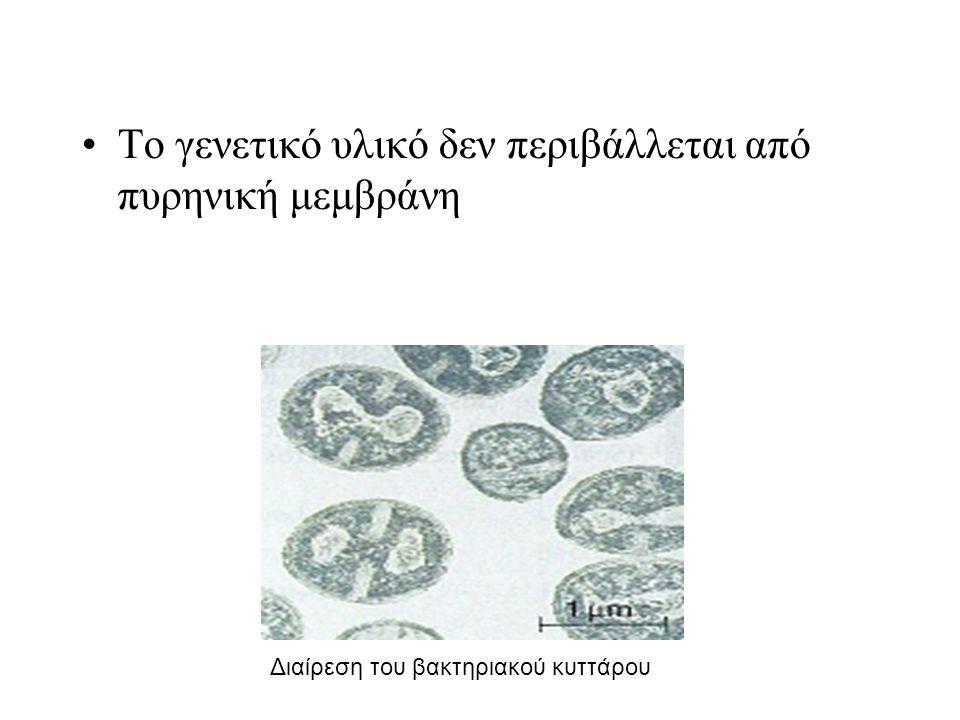 Το γενετικό υλικό δεν περιβάλλεται από πυρηνική μεμβράνη Διαίρεση του βακτηριακού κυττάρου