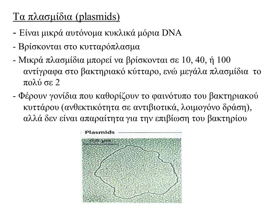 Τα πλασμίδια (plasmids) - Είναι μικρά αυτόνομα κυκλικά μόρια DNA - Βρίσκονται στο κυτταρόπλασμα - Μικρά πλασμίδια μπορεί να βρίσκονται σε 10, 40, ή 100 αντίγραφα στο βακτηριακό κύτταρο, ενώ μεγάλα πλασμίδια το πολύ σε 2 - Φέρουν γονίδια που καθορίζουν το φαινότυπο του βακτηριακού κυττάρου (ανθεκτικότητα σε αντιβιοτικά, λοιμογόνο δράση), αλλά δεν είναι απαραίτητα για την επιβίωση του βακτηρίου