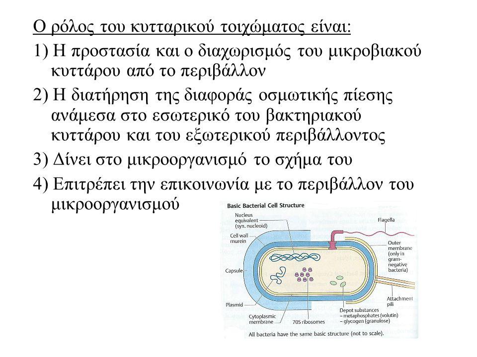 Ο ρόλος του κυτταρικού τοιχώματος είναι: 1) Η προστασία και ο διαχωρισμός του μικροβιακού κυττάρου από το περιβάλλον 2) Η διατήρηση της διαφοράς οσμωτικής πίεσης ανάμεσα στο εσωτερικό του βακτηριακού κυττάρου και του εξωτερικού περιβάλλοντος 3) Δίνει στο μικροοργανισμό το σχήμα του 4) Επιτρέπει την επικοινωνία με το περιβάλλον του μικροοργανισμού