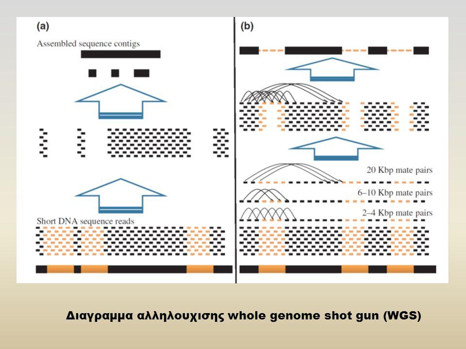 Διαγραμμα αλληλουχισης whole genome shot gun (WGS)