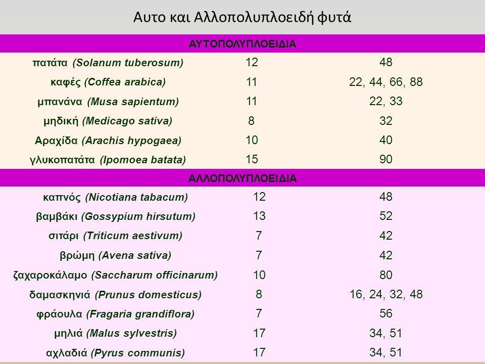 Αυτο και Αλλοπολυπλοειδή φυτά ΑΥΤΟΠΟΛΥΠΛΟΕΙΔΙΑ πατάτα (Solanum tuberosum) 1248 καφές (Coffea arabica) 1122, 44, 66, 88 μπανάνα (Musa sapientum) 1122, 33 μηδική (Medicago sativa) 832 Αραχίδα (Arachis hypogaea) 1040 γλυκοπατάτα (Ipomoea batata) 1590 ΑΛΛΟΠΟΛΥΠΛΟΕΙΔΙΑ καπνός (Nicotiana tabacum) 1248 βαμβάκι (Gossypium hirsutum) 1352 σιτάρι (Triticum aestivum) 742 βρώμη (Avena sativa) 742 ζαχαροκάλαμο (Saccharum officinarum) 1080 δαμασκηνιά (Prunus domesticus) 816, 24, 32, 48 φράουλα (Fragaria grandiflora) 756 μηλιά (Malus sylvestris) 1734, 51 αχλαδιά (Pyrus communis) 1734, 51