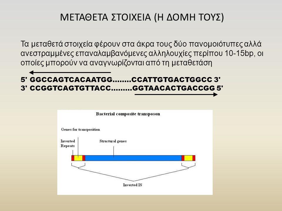 ΜΕΤΑΘΕΤΑ ΣΤΟΙΧΕΙΑ (Η ΔΟΜΗ ΤΟΥΣ) Τα μεταθετά στοιχεία φέρουν στα άκρα τους δύο πανομοιότυπες αλλά ανεστραμμένες επαναλαμβανόμενες αλληλουχίες περίπου 10-15bp, οι οποίες μπορούν να αναγνωρίζονται από τη μεταθετάση 5 GGCCAGTCACAATGG........CCATTGTGACTGGCC 3 3 CCGGTCAGTGTTACC.........GGTAACACTGACCGG 5