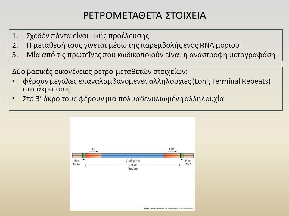 Δύο βασικές οικογένειες ρετρο-μεταθετών στοιχείων: φέρουν μεγάλες επαναλαμβανόμενες αλληλουχίες (Long Terminal Repeats) στα άκρα τους Στο 3' άκρο τους φέρουν μια πολυαδενυλιωμένη αλληλουχία ΡΕΤΡΟΜΕΤΑΘΕΤΑ ΣΤΟΙΧΕΙΑ 1.Σχεδόν πάντα είναι ιικής προέλευσης 2.Η μετάθεσή τους γίνεται μέσω της παρεμβολής ενός RNA μορίου 3.Μία από τις πρωτεΐνες που κωδικοποιούν είναι η ανάστροφη μεταγραφάση