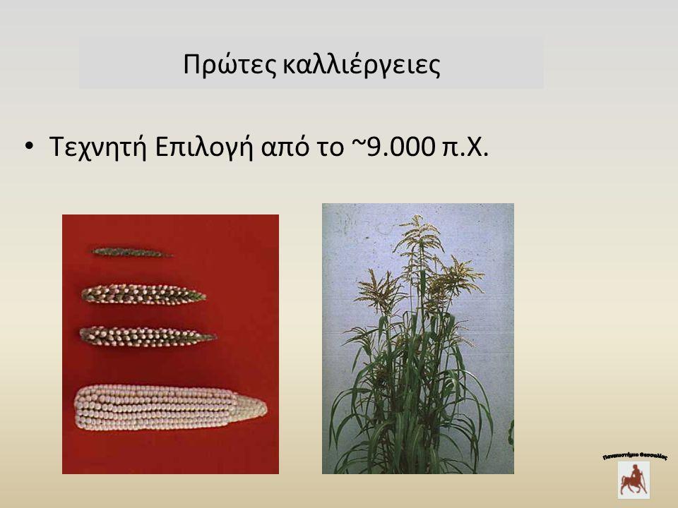 Πρώτες καλλιέργειες Τεχνητή Επιλογή από το ~9.000 π.Χ.