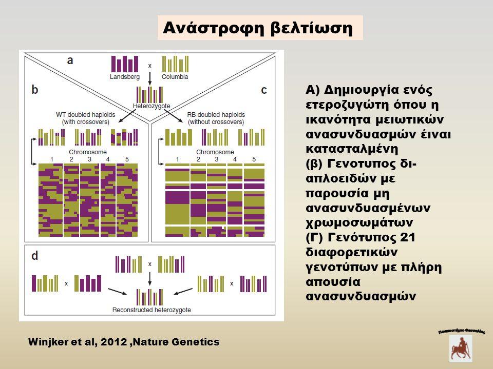 Α) Δημιουργία ενός ετεροζυγώτη όπου η ικανότητα μειωτικών ανασυνδυασμών έιναι κατασταλμένη (β) Γενοτυπος δι- απλοειδών με παρουσία μη ανασυνδυασμένων χρωμοσωμάτων (Γ) Γενότυπος 21 διαφορετικών γενοτύπων με πλήρη απουσία ανασυνδυασμών Winjker et al, 2012,Nature Genetics Aνάστροφη βελτίωση