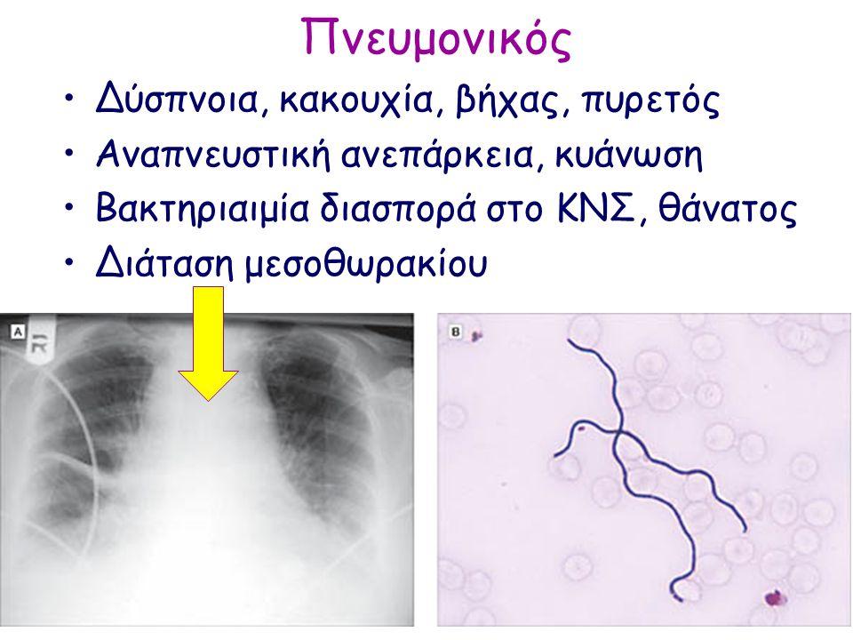 Πνευμονικός Δύσπνοια, κακουχία, βήχας, πυρετός Αναπνευστική ανεπάρκεια, κυάνωση Βακτηριαιμία διασπορά στο ΚΝΣ, θάνατος Διάταση μεσοθωρακίου