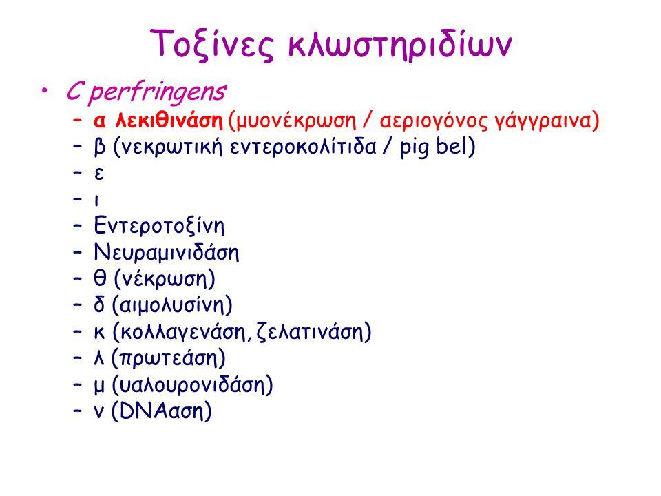 Τοξίνες κλωστηριδίων C perfringens –α λεκιθινάση (μυονέκρωση / αεριογόνος γάγγραινα) –β (νεκρωτική εντεροκολίτιδα / pig bel) –ε–ε –ι–ι –Εντεροτοξίνη –Νευραμινιδάση –θ (νέκρωση) –δ (αιμολυσίνη) –κ (κολλαγενάση, ζελατινάση) –λ (πρωτεάση) –μ (υαλουρονιδάση) –ν (DNAαση)