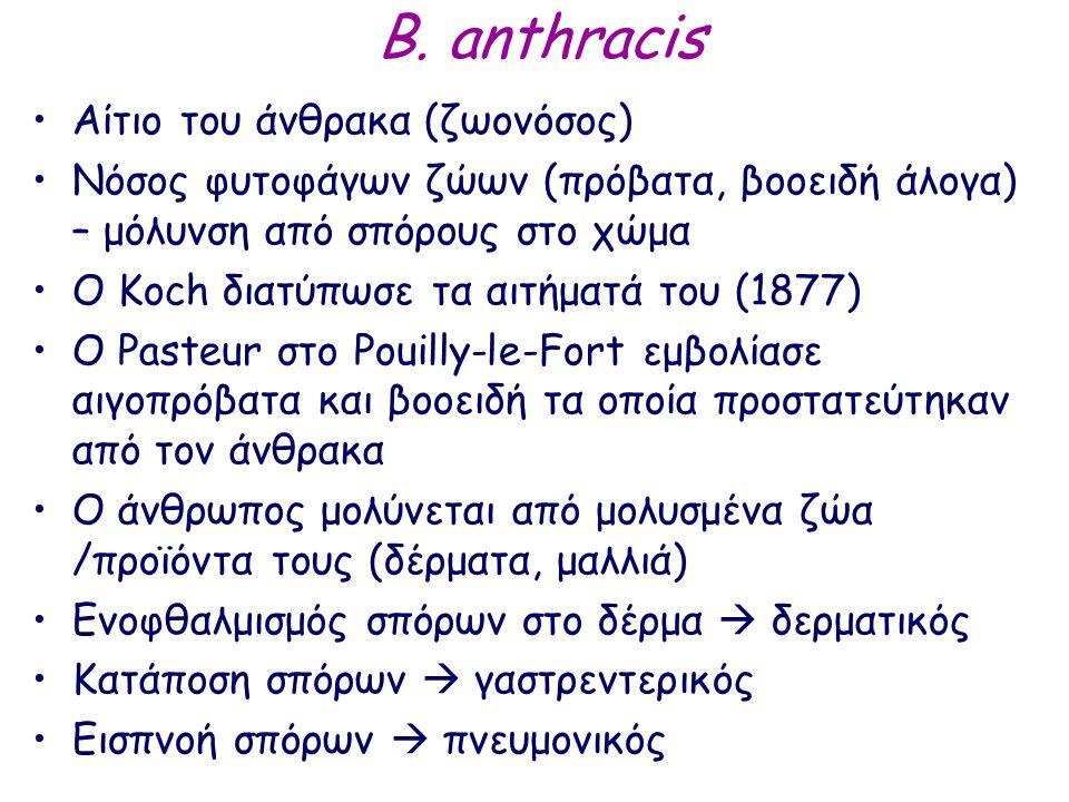 B. anthracis Αίτιο του άνθρακα (ζωονόσος) Νόσος φυτοφάγων ζώων (πρόβατα, βοοειδή άλογα) – μόλυνση από σπόρους στο χώμα Ο Κοch διατύπωσε τα αιτήματά το