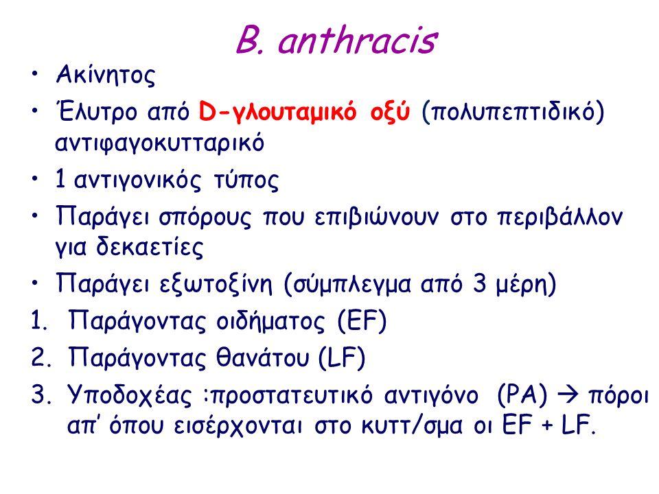 B. anthracis Ακίνητος Έλυτρο από D-γλουταμικό οξύ (πολυπεπτιδικό) αντιφαγοκυτταρικό 1 αντιγονικός τύπος Παράγει σπόρους που επιβιώνουν στο περιβάλλον