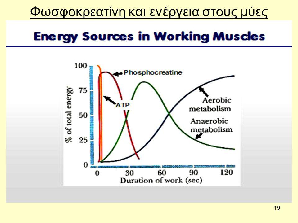 19 Φωσφοκρεατίνη και ενέργεια στους μύες