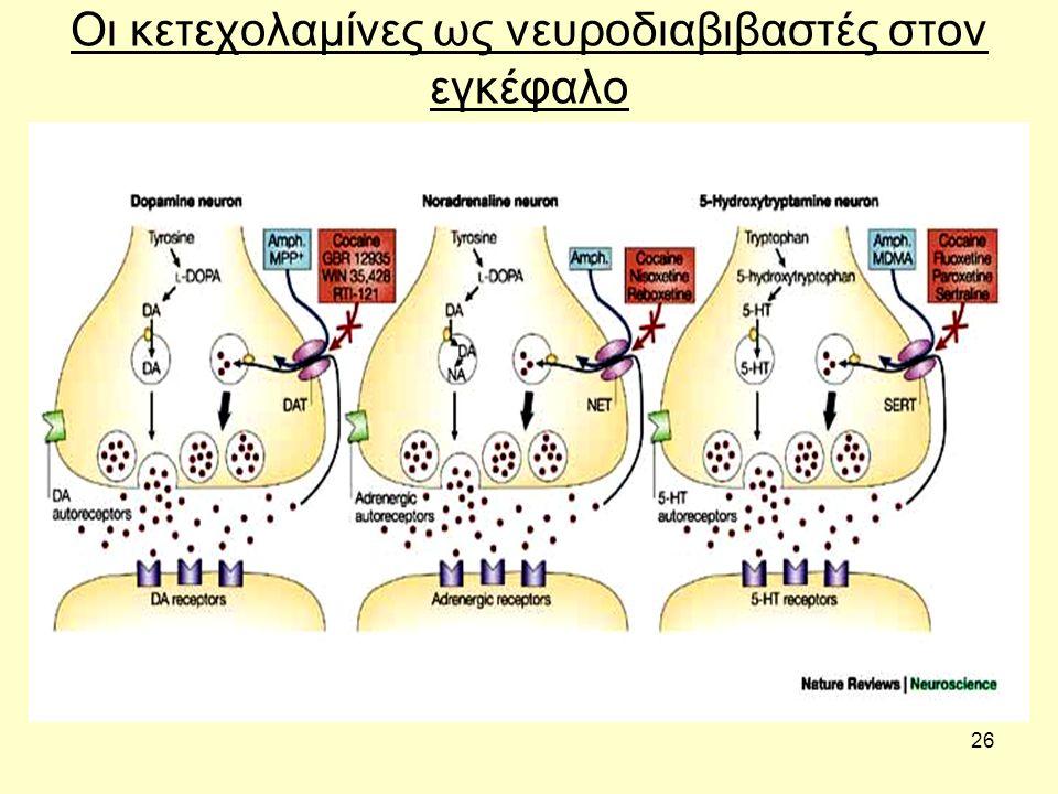 26 Οι κετεχολαμίνες ως νευροδιαβιβαστές στον εγκέφαλο