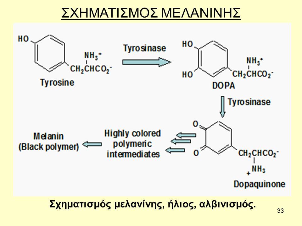 33 ΣΧΗΜΑΤΙΣΜΟΣ ΜΕΛΑΝΙΝΗΣ Σχηματισμός μελανίνης, ήλιος, αλβινισμός.