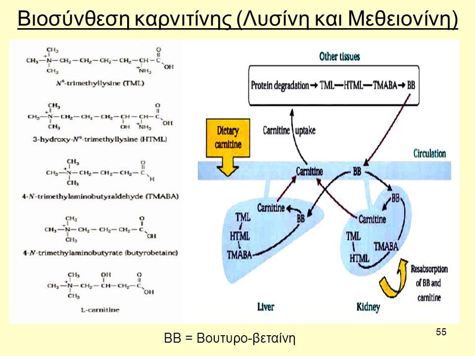 55 Βιοσύνθεση καρνιτίνης (Λυσίνη και Μεθειονίνη) ΒΒ = Βουτυρο-βεταίνη