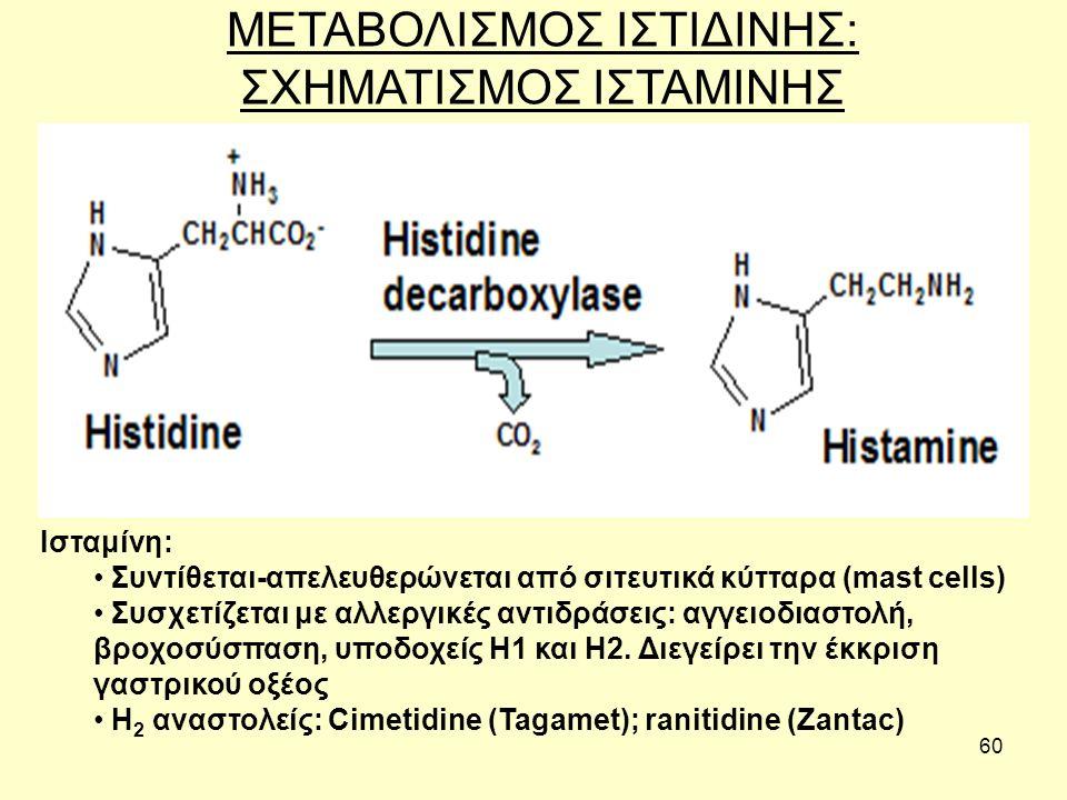 60 ΜΕΤΑΒΟΛΙΣΜΟΣ ΙΣΤΙΔΙΝΗΣ: ΣΧΗΜΑΤΙΣΜΟΣ ΙΣΤΑΜΙΝΗΣ Ισταμίνη: Συντίθεται-απελευθερώνεται από σιτευτικά κύτταρα (mast cells) Συσχετίζεται με αλλεργικές αντιδράσεις: αγγειοδιαστολή, βροχοσύσπαση, υποδοχείς Η1 και Η2.