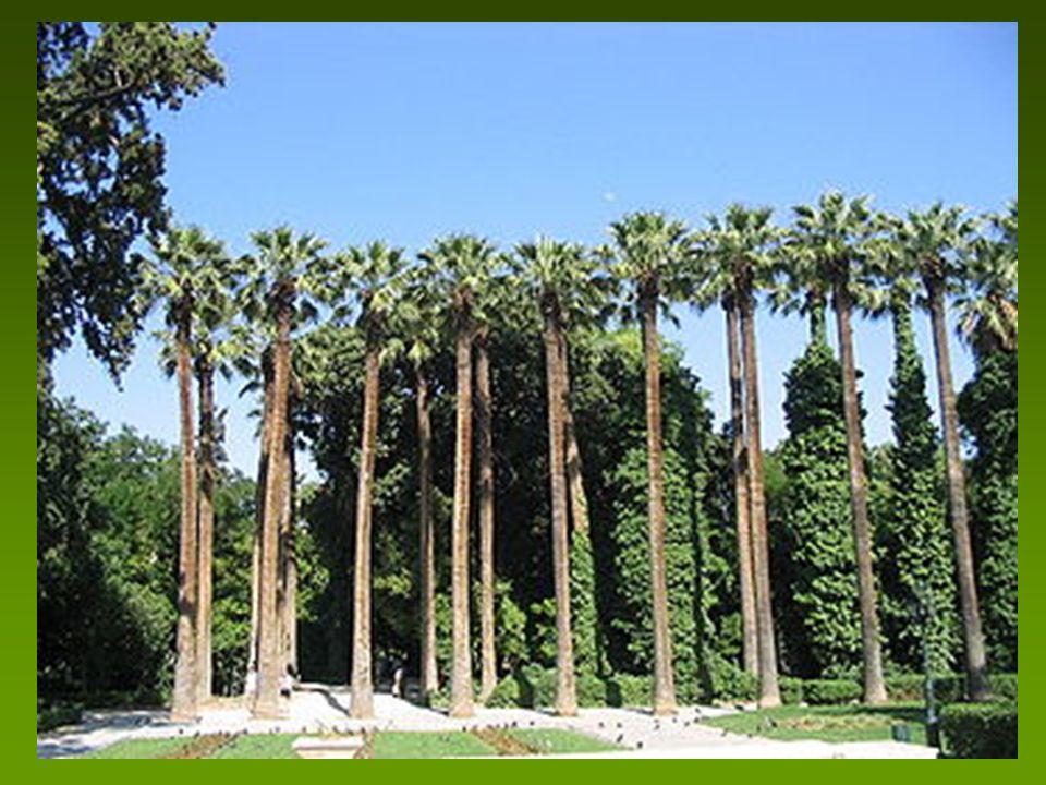 - 7.000 δένδρα, 40.000 θάμνοι και άλλα φυτά, 519 είδη και ποικιλίες (102 ήταν αυτοφυή, 417 εισαχθέντα (Ιταλία, Αίγυπτο, Ιαπωνία) Πολλά δασικά είδη, καλλωπιστικά και οπωροφόρα, (75% είναι αειθαλή και 25% φυλλοβόλα) Διατηρούνται ακόμα μία αριά στο εσωτερικό – και στην είσοδο οι ουασινγκτόνιες ηλικίας 170 χρόνων που αποτελούν σήμερα «Φυτικά Μνημεία» Μεγάλο πλεονέκτημα αποτελεί η χαμηλότερη θερμοκρασία κατά 2-3 C το καλοκαίρι λόγω της μη ύπαρξης ασφαλτοστρωμένων δρόμων