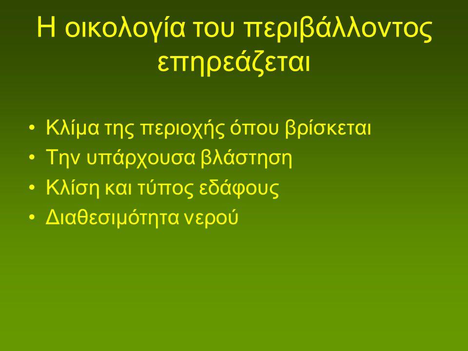 Lithodora zahnii
