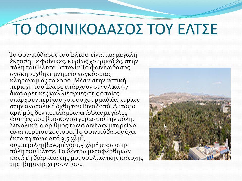 ΤΟ ΦΟΙΝΙΚΟΔΑΣΟΣ ΤΟΥ ΕΛΤΣΕ Το φοινικόδασος του Έλτσε είναι μία μεγάλη έκταση με φοίνικες, κυρίως χουρμαδιές, στην πόλη του Έλτσε, Ισπανία Το φοινικόδασος ανακηρύχθηκε μνημείο παγκόσμιας κληρονομιάς το 2000.