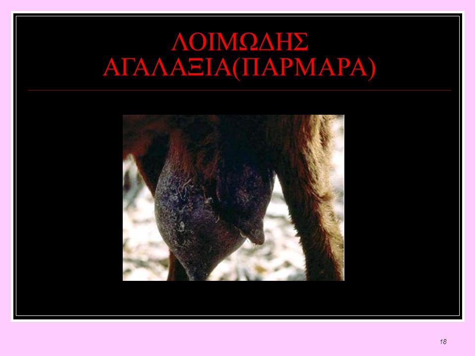 18 ΛΟΙΜΩΔΗΣ ΑΓΑΛΑΞΙΑ(ΠΑΡΜΑΡΑ)