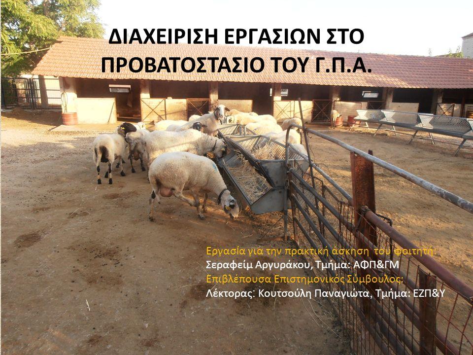 Φυλές που εκτρέφονται Στο Γεωπονικό Πανεπιστήμιο Αθηνών εκτρέφονται τρεις καθαρές φυλές : Η Καραγκούνικη Η Χιώτικη Η ορεινή Ηπείρου & μία διασταυρωμένη: Η βελτιωμένη Ηπείρου (50% Ορ.