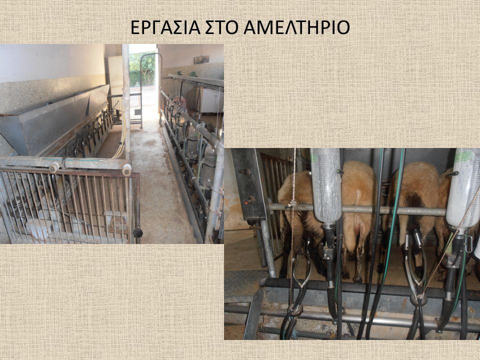 ΕΡΓΑΣΙΑ ΣΤΟ ΑΜΕΛΤΗΡΙΟ