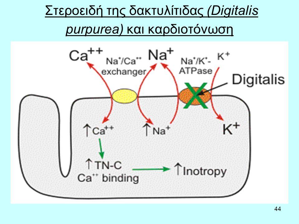 44 Στεροειδή της δακτυλίτιδας (Digitalis purpurea) και καρδιοτόνωση
